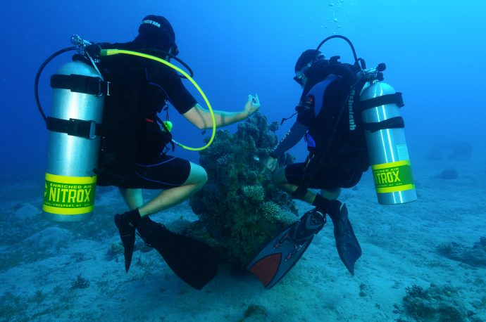 Where the fun begins: proffessional divers at Eilat's reef