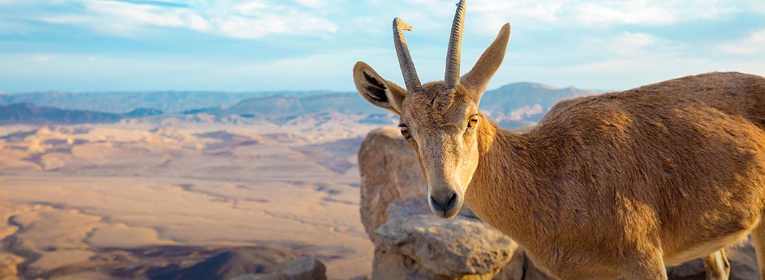15 Day Israel and Egypt Private Tour
